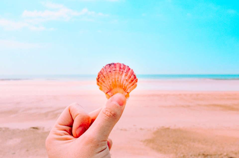 貝がらと海岸